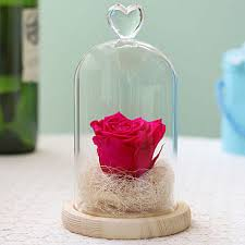 Rose And Glass Dome Lights For Floor and Wall Mounted
